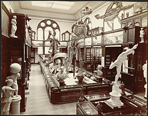 What is now the Faculty Room in Nassau Hall once housed the University's first museum, in which works of art, archaeology, and natural history were displayed side by side, ca. 1886