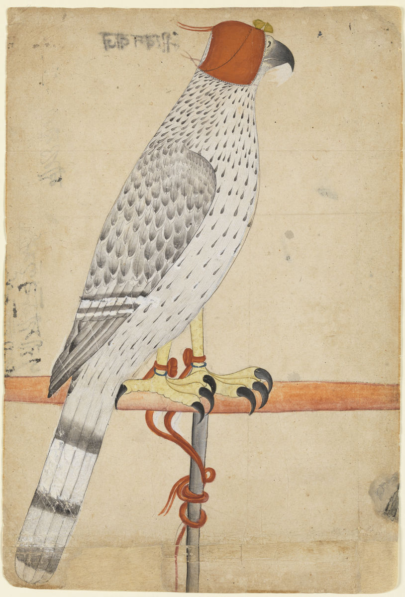Indian, Anonymous, Punjab Hills, India, Ferocious Falcon, late 18th century. Opaque watercolor on paper. Princeton University Art Musuem, Museum purchase, Fowler McCormick, Class of 1921, Fund . Photo Bruce M. White.