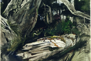Andrew Wyeth. Maine Woods